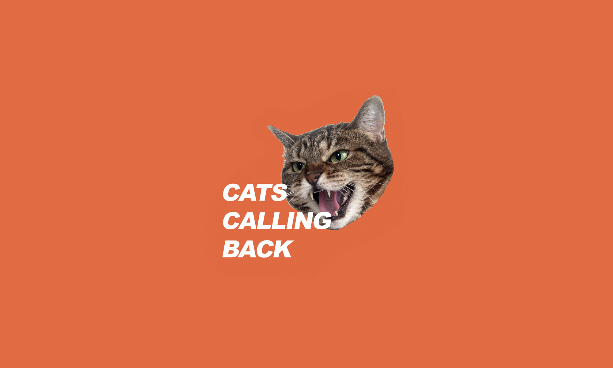 CATS CALLING BACK